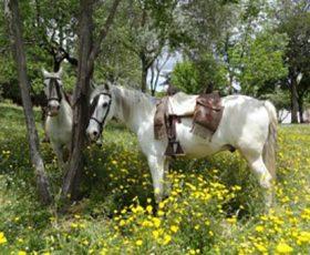 Rutas-a-caballo-Aracena-recomendaciones-alojamiento